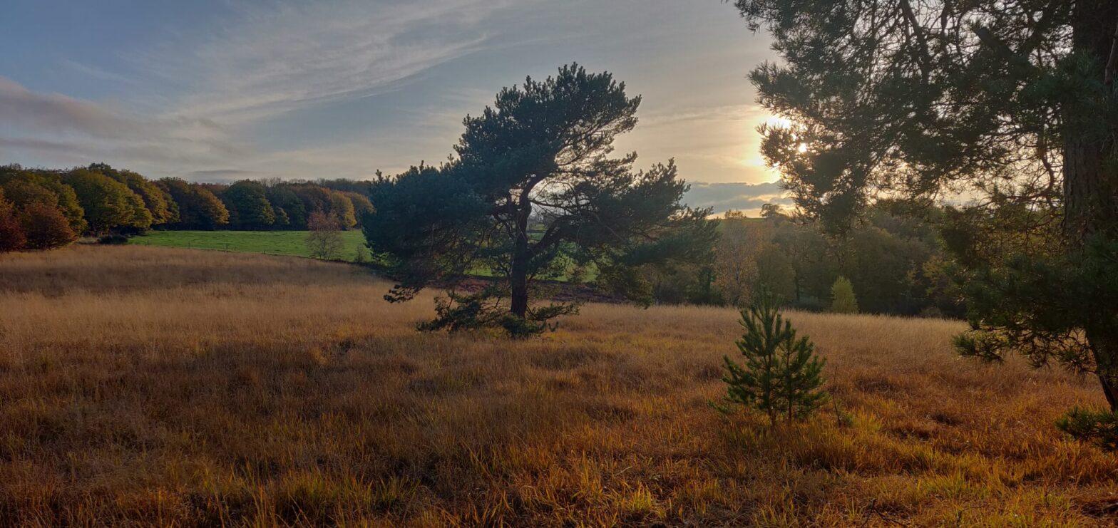 Photo balade paysage de savane